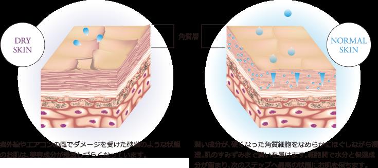 角質層イメージ